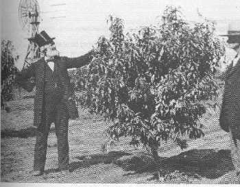 Reverend Golder in his orchard